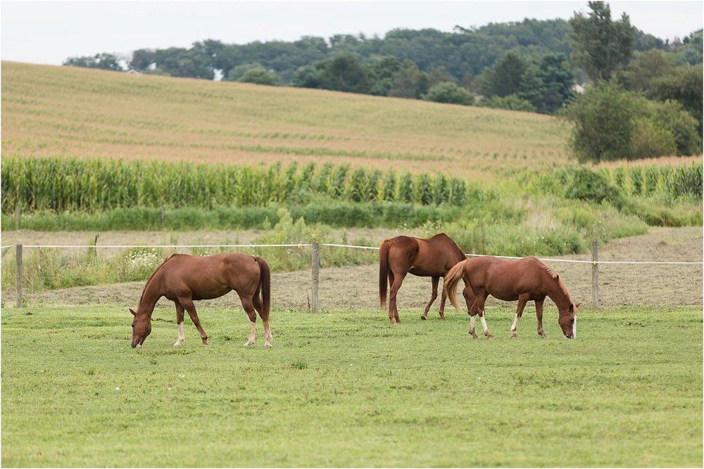 carroll-county-horse-photographer_0113.jpg