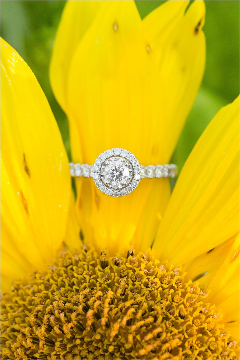 Sunflower-field-engagement-maryland-31.jpg