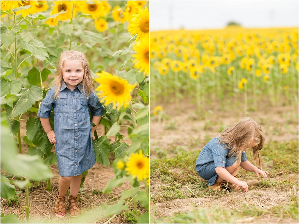 carroll-county-photographer-sunflower-field-36.jpg