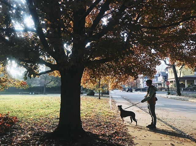 Dog walker extraordinaire | 11.24.18 • • • #vsco #vscocam #dogsofinstagram #dogs #dogwalker #fall #autumn