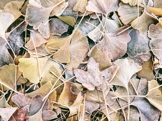 Late autumn frost | 11.24.18 • • • #frost #autumn #fall #foliage #thanksgiving #vsco #vscocam #iphone