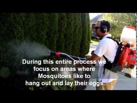 mosquitosprayservice.jpg
