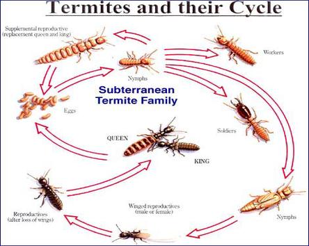 termite-control-nj.png