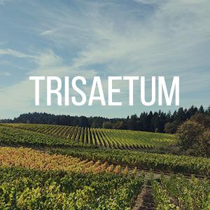 trisaetum.jpg
