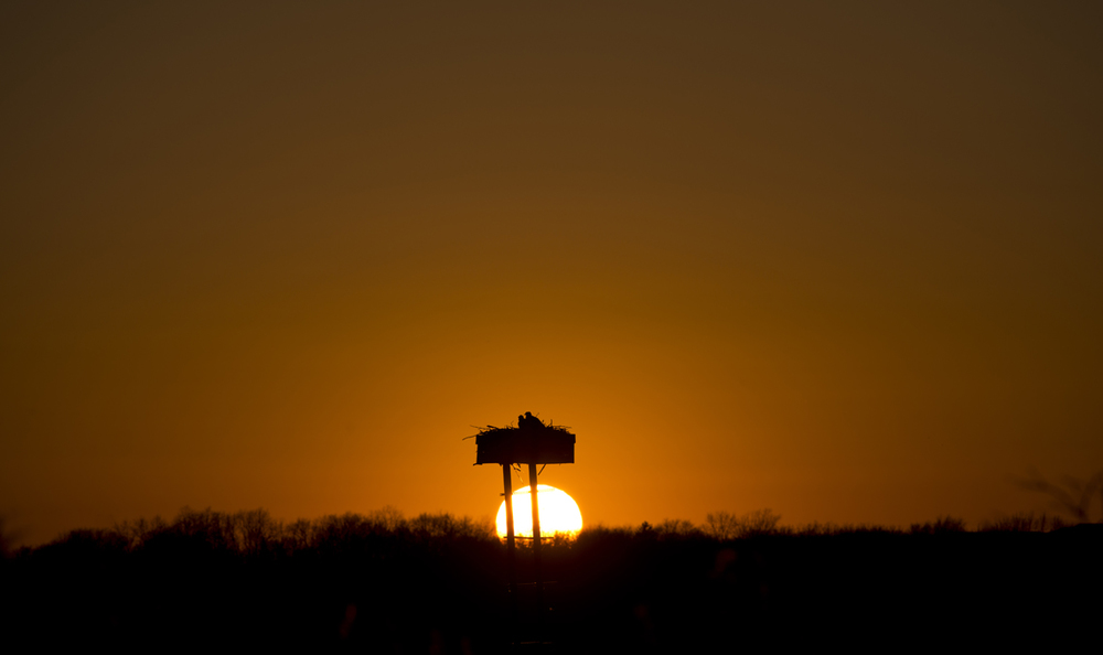 SunsetOspreyOG.jpg