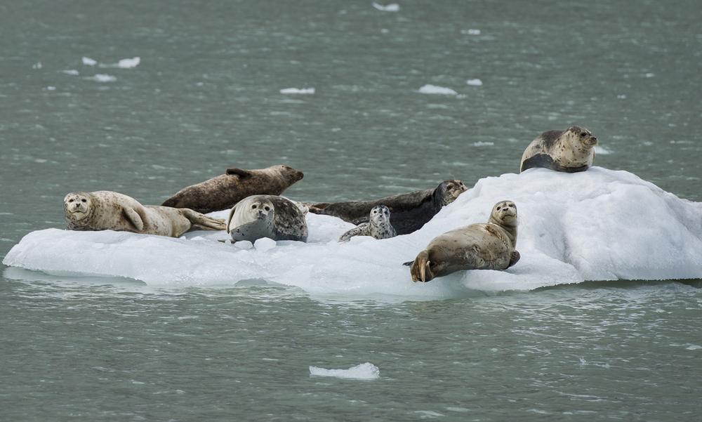 Seals_2_NOWEB.jpg