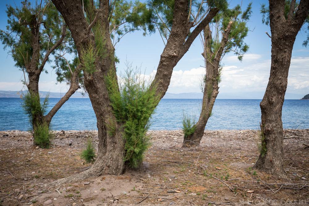 Les magnifiques paysages de Lesbos sont de nouveau prêts à recevoir les touristes.