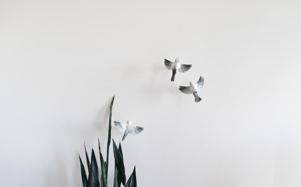 3birdsplant.jpg