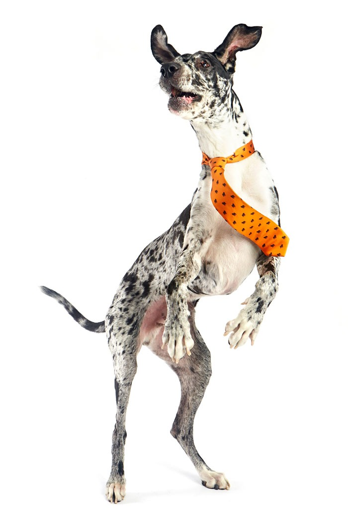 bows-n-ties :     One of the handsome models supporting our   DOGS-N-TIES   fundraiser for the SFSPCA.