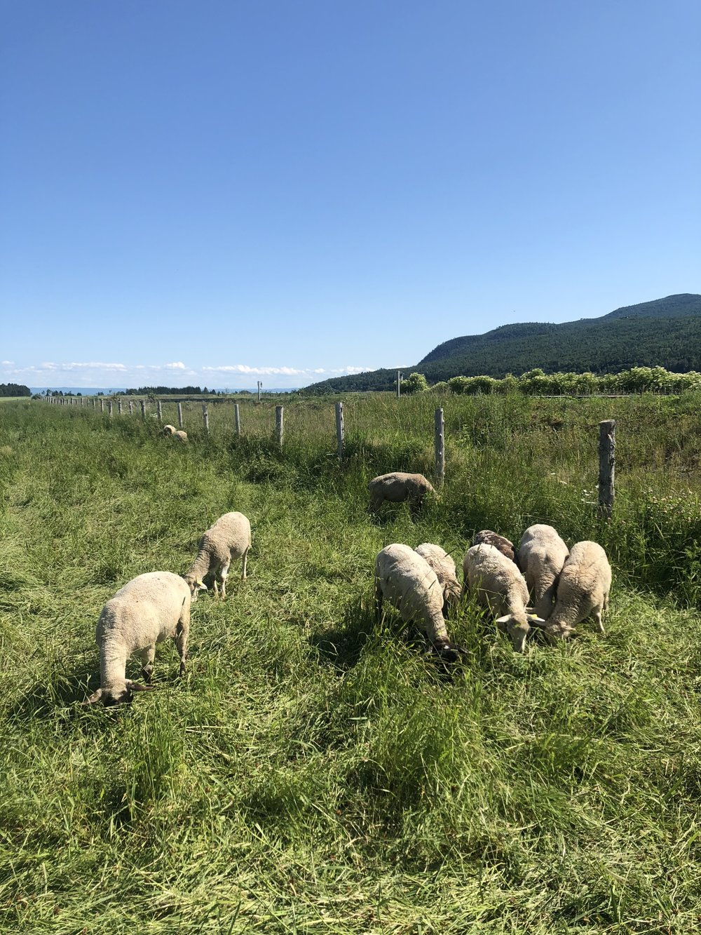 The livestock farm at Le Germain Charlevoix