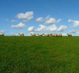 Biblical Theology and Shepherding