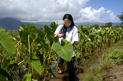 Lyndsey Haraguchi-Nakayama is the fifth generation to work these muddy fields.