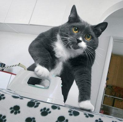 cat-iron.jpg