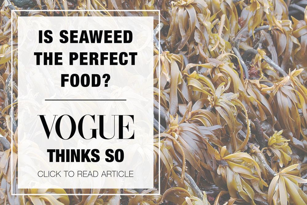 seaweed_article_img.jpg