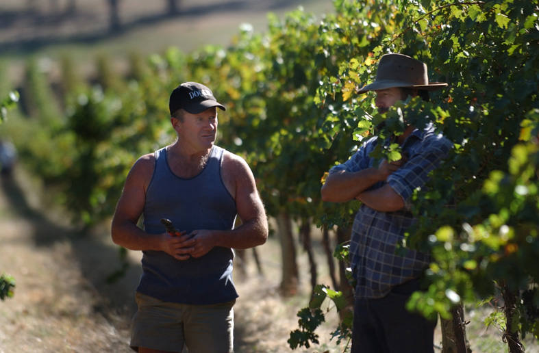 Max & Alex assessing the grapes