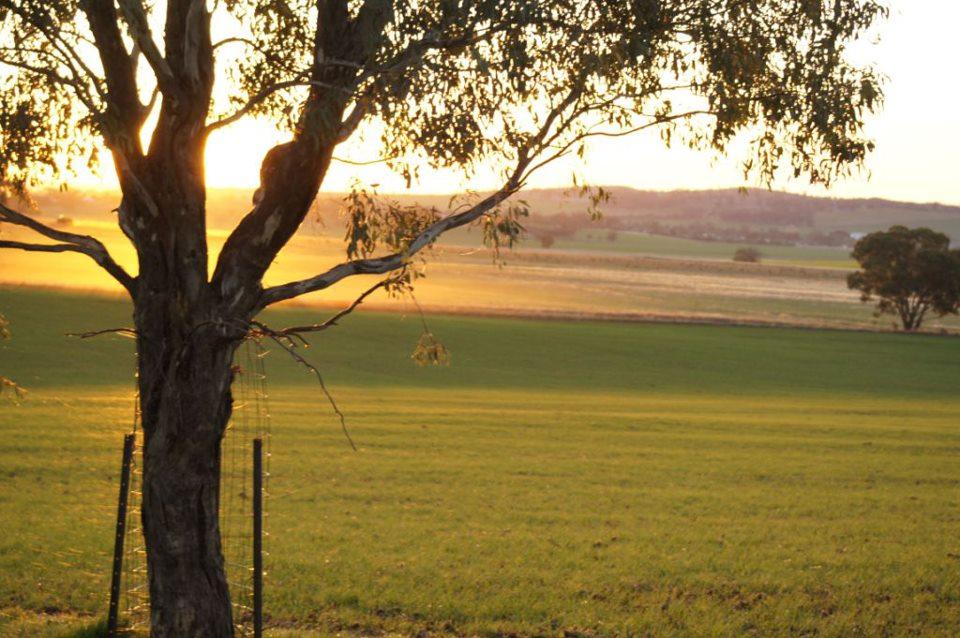 serana's landscape.jpg
