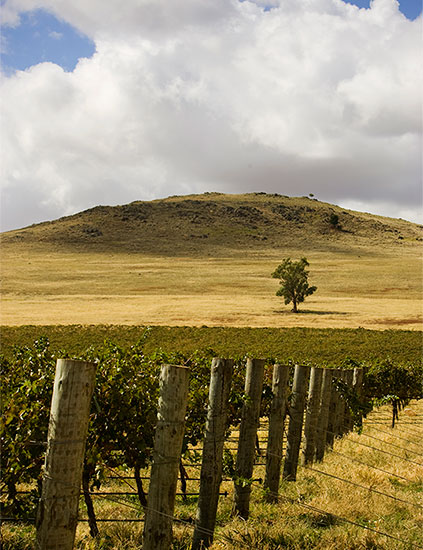 vineyard-dookie-hills.jpg