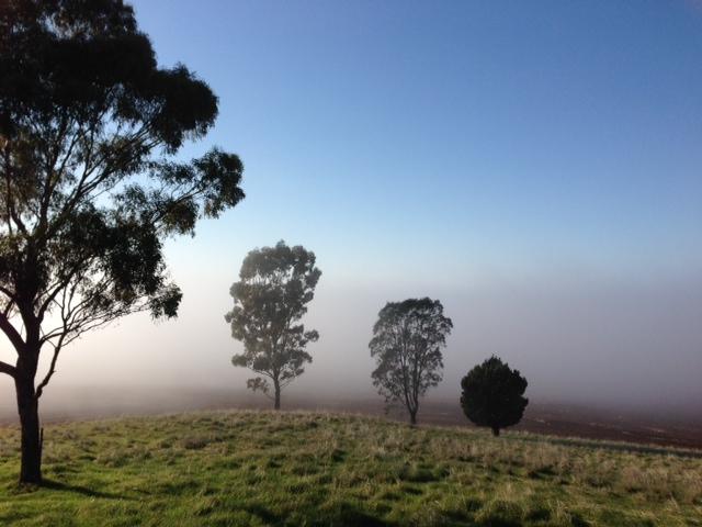 Mist.jpg