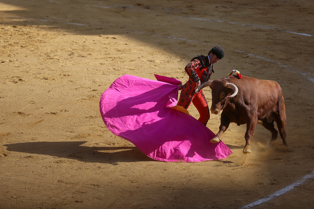 "David ""Fandi"" Fandila Marín uses his fuchsia and gold capote, or cape, to lead the bull through a series of movements, sizing up his opponent. This is the first of three segments of each fight, called the Tercio de Varas. The corrida de toros, or bullfight, took place during the Saint Peter de Regalado's festival in Valladolid, Spain on May 11, 2014."