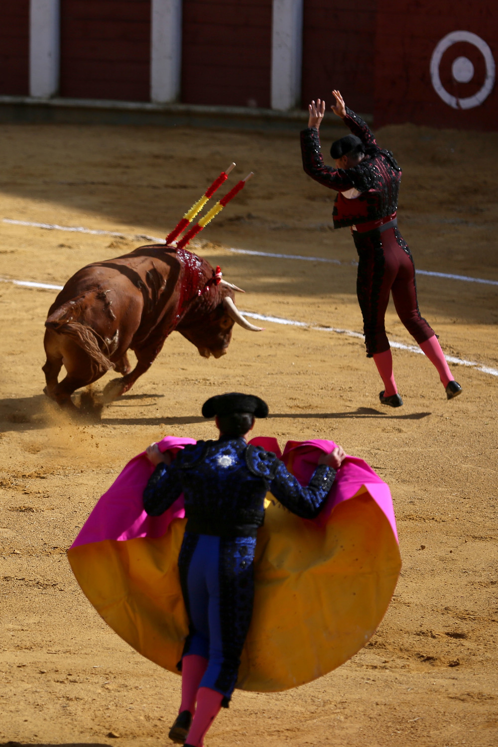 The banderilleros, an integral part of the matador's team, stab the bull with colorful batons during the second part of the modern-styled bullfight.