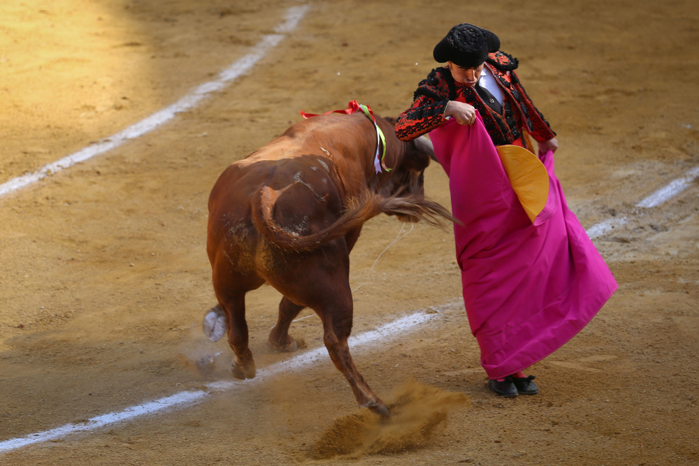 """El Fandi"" wows the crowd with his quick reflexes as he uses his fuchsia and gold capote to lead the bull through a series of movements during the Tercio de Varas."