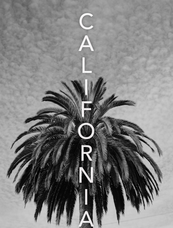 Canary Island Date Palm. San Diego, CA