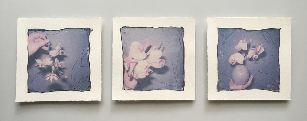 Emma Starr polaroid emulsion triptych analogue anne mckee key west .jpg