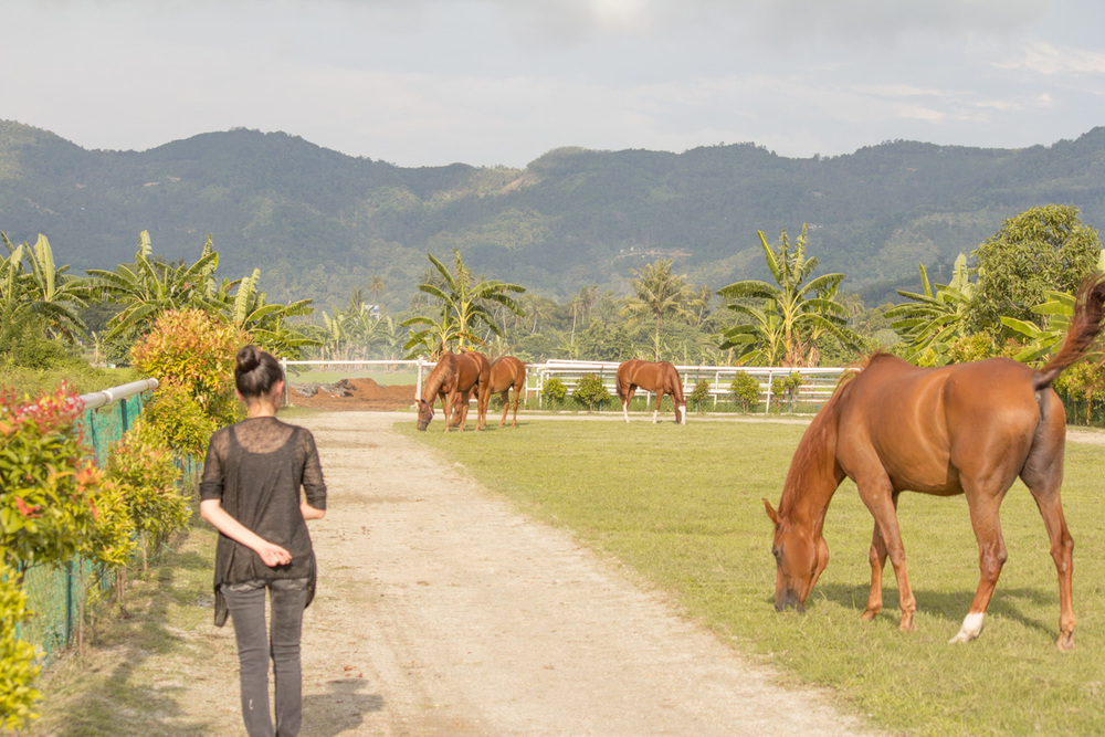 Checking out the horses, Countryside Stables penang