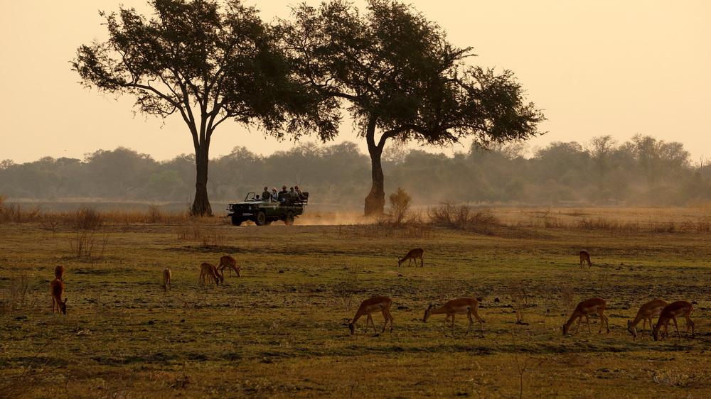 safari drive.JPG