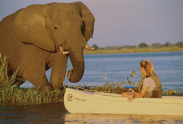 Chiawa canoe elepahnt.jpg