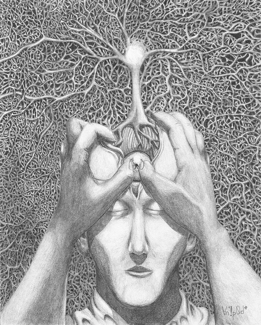 "Reveal, graphite on paper, 8x10"" 2014."