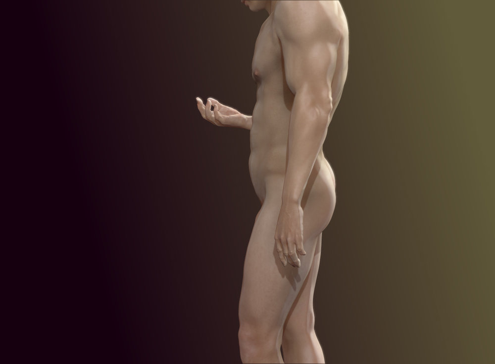 Standard man - Anatomy Studies: Athletic Human Male