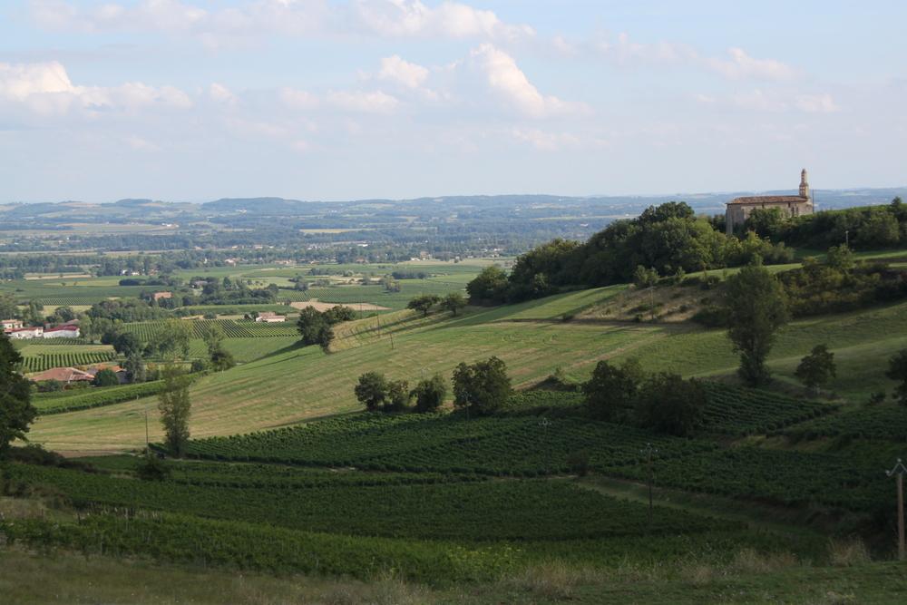vue sur les vignes et sur montaigut.JPG