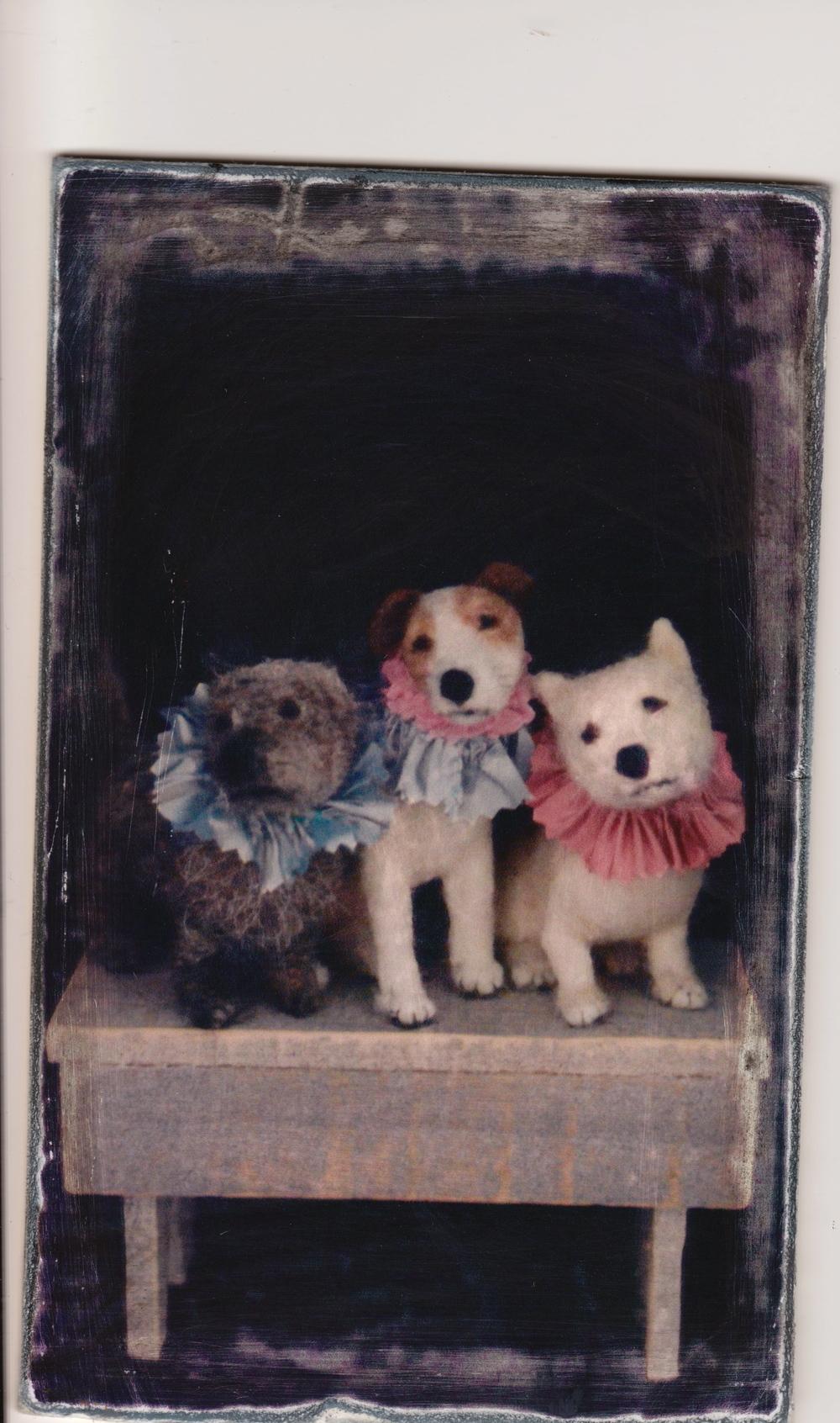 old dog 3.jpg