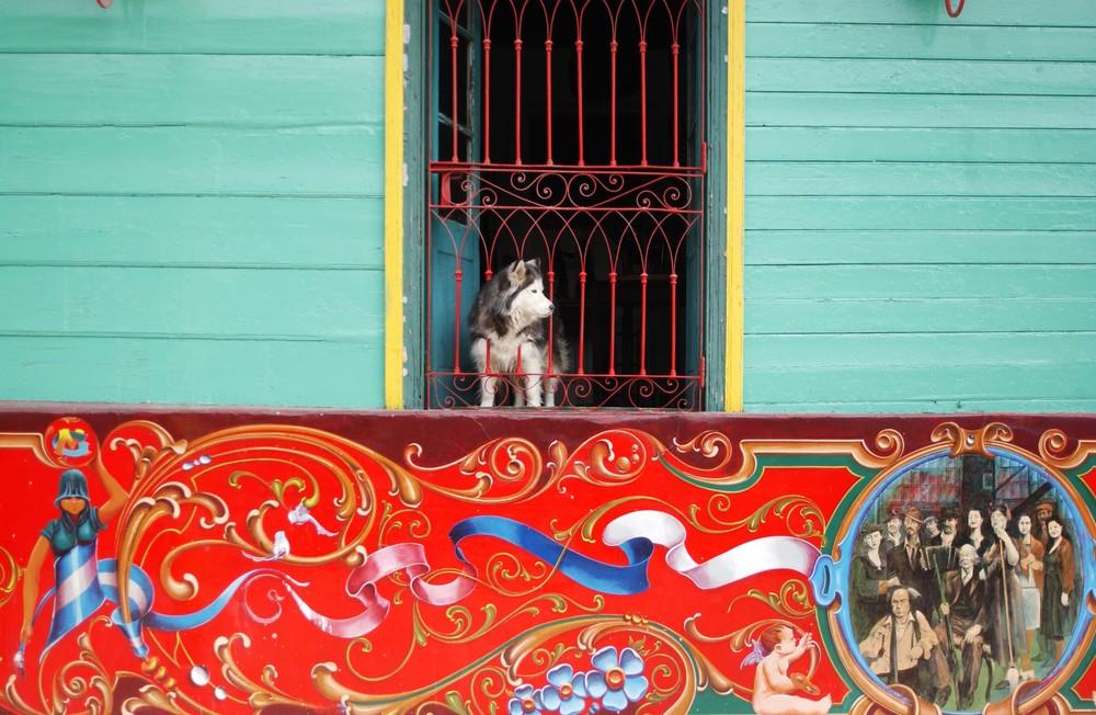 Boca Huskey.jpg