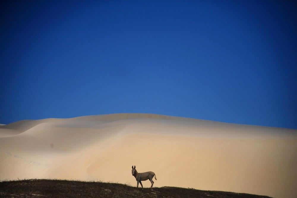 donk dune.jpg