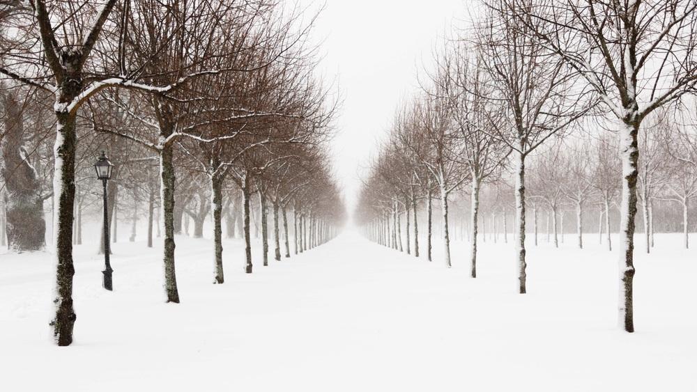 Snowy Avenue.