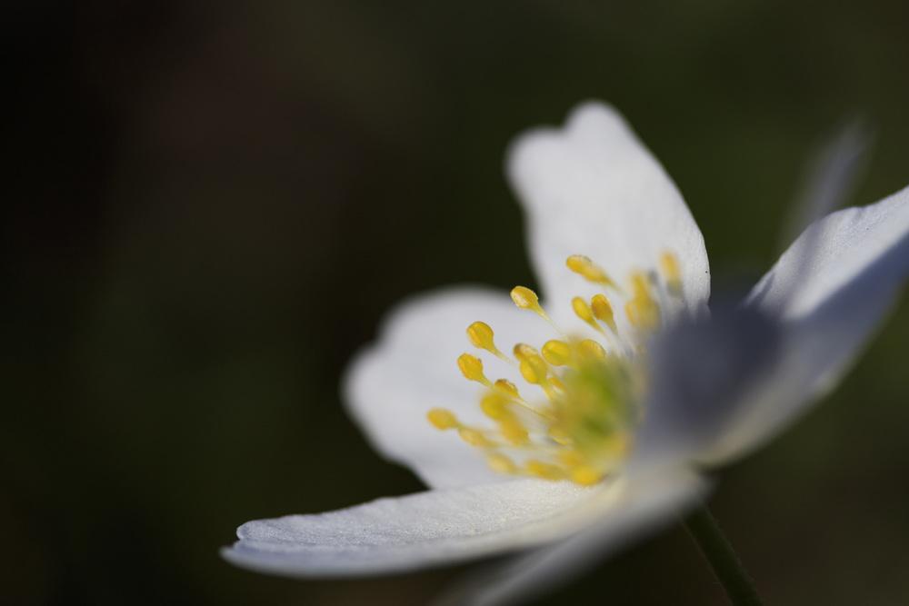 Spring closeups.