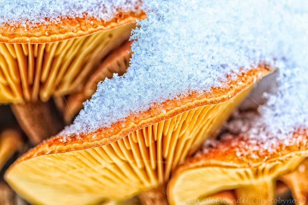 Frozen fungus.