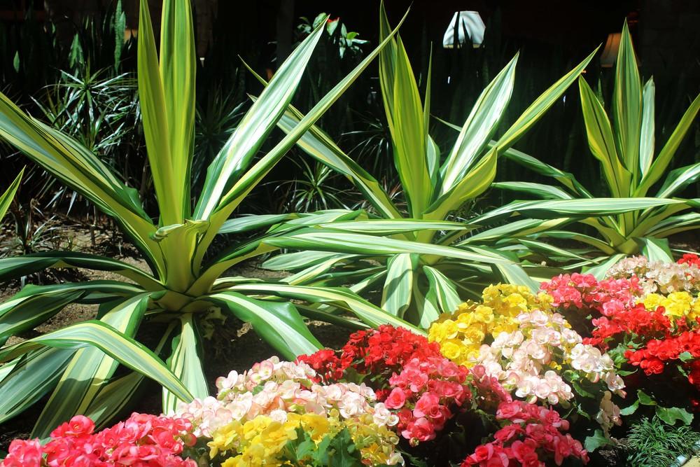 gaylord texan atrium plants