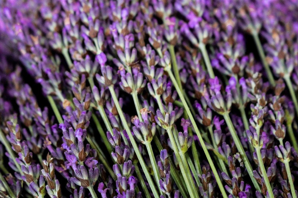 Lavender-100 (1).jpg
