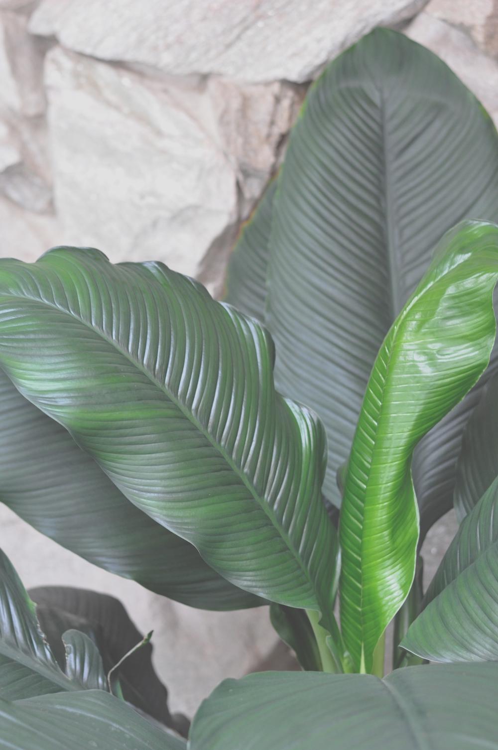 Plant 3.13.18 PM.jpg