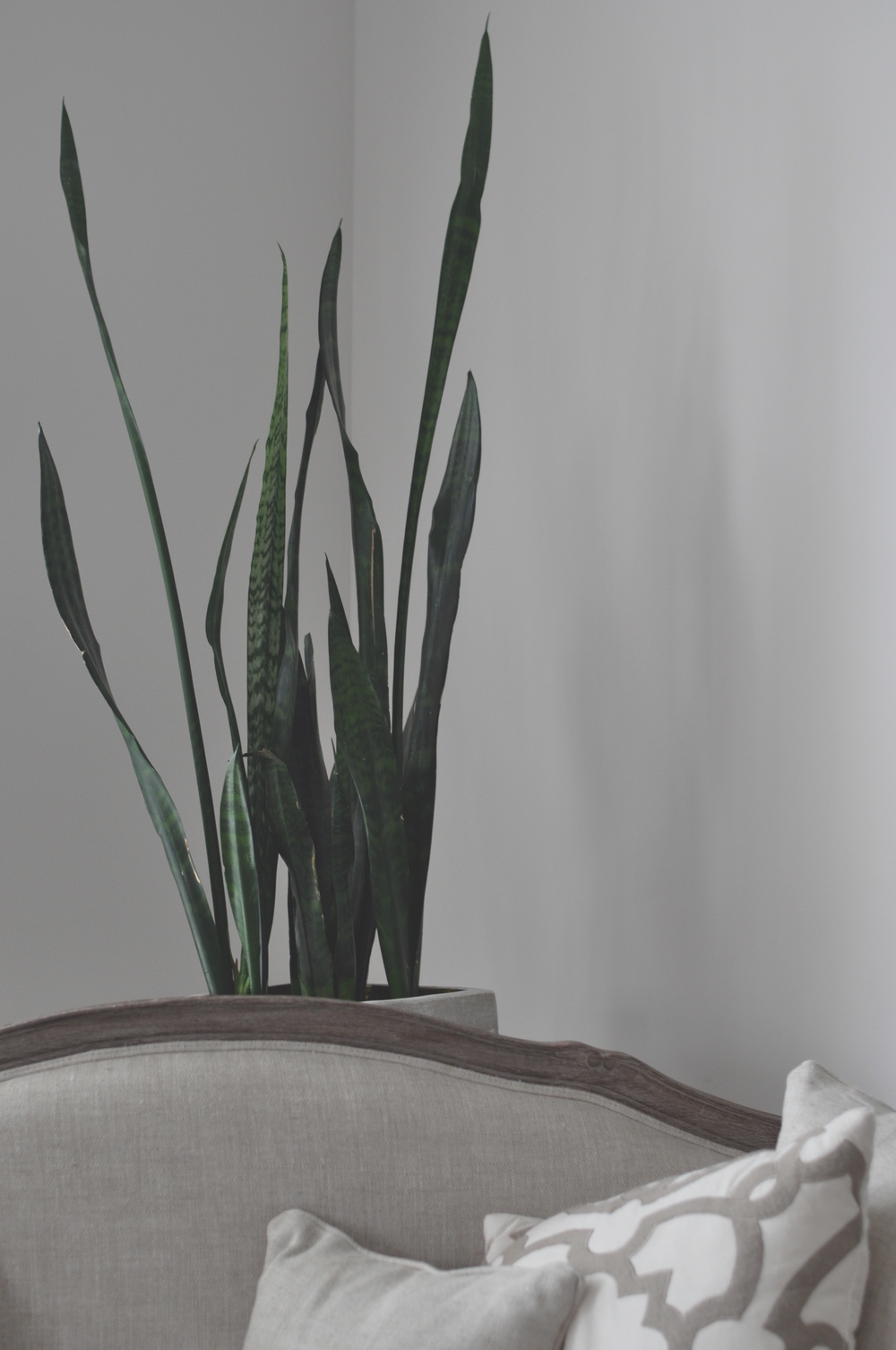 Plant 2.12.40 PM.jpg