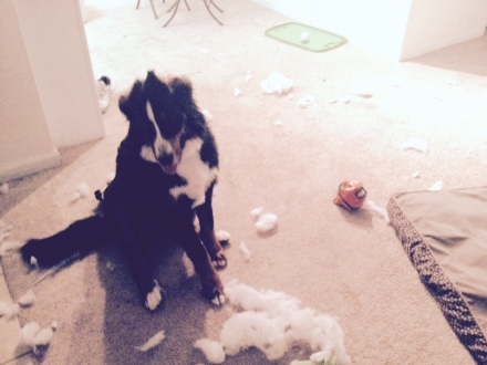"""Mom, my toys exploded today while you were at work."""
