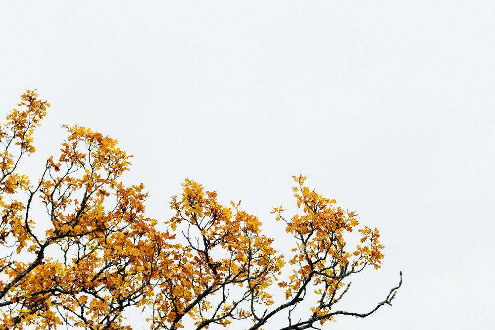 GUSTAV-THUESEN-adventure-denmark-photographer-nature-landscape-KØBENHAVN-FOTOGRAF-lifestyle-1.jpg