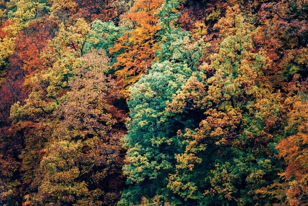 GUSTAV-THUESEN-adventure-denmark-photographer-nature-landscape-KØBENHAVN-FOTOGRAF-lifestyle-7.jpg