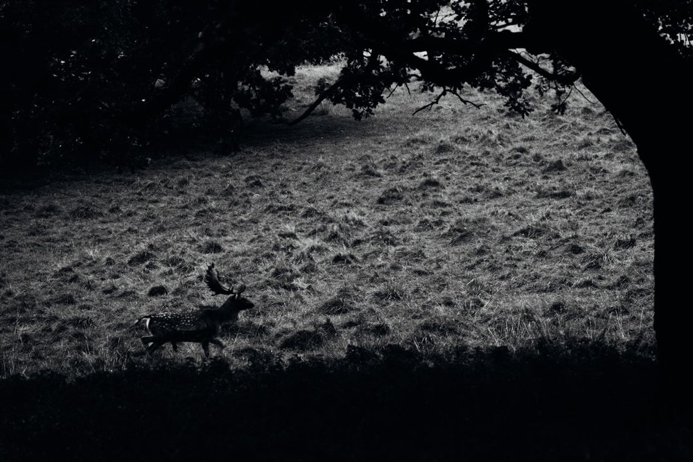 GUSTAV-THUESEN-PHOTOGRAPHER-2.jpg