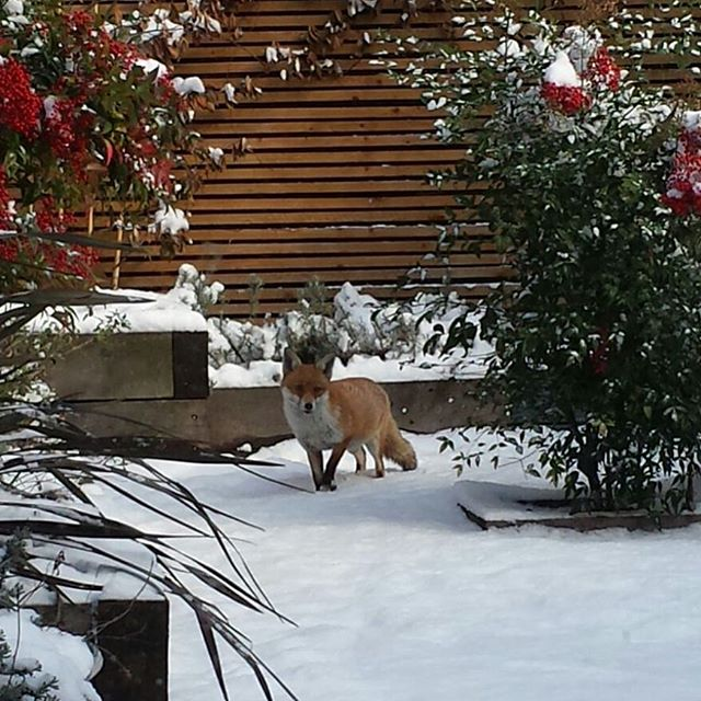 Snow & wildlife