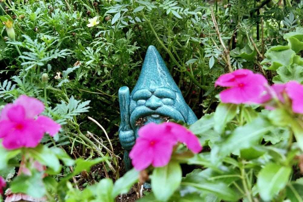 gnome .jpg