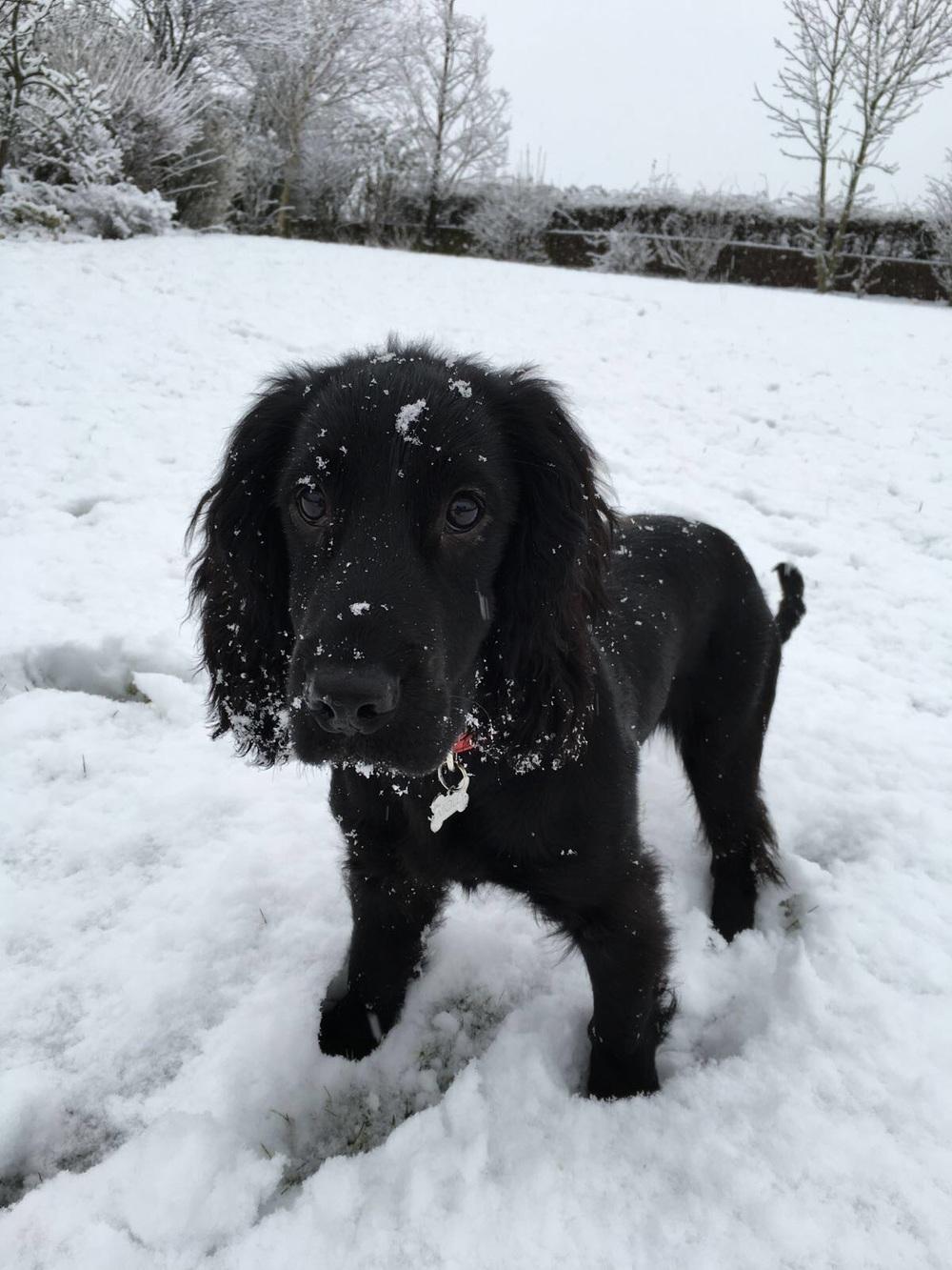 Snowy beast!